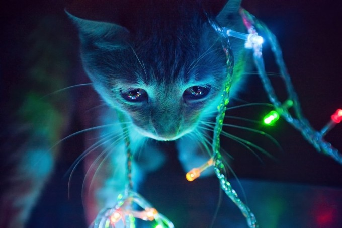 cat-in-lights