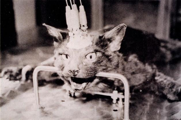 vivisezione-gatto